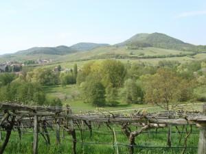 The Haardt Mountains from Rebholtz' old vine vineyards